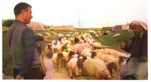 con il pastore in Turchia